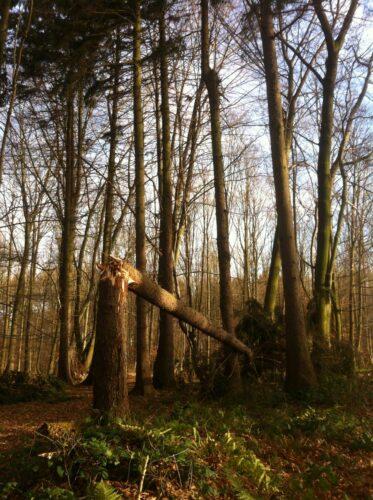 Geknickter Baum im Sturm - Resilienz-Coaching